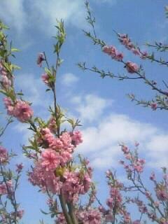 春やね(*^_^*)